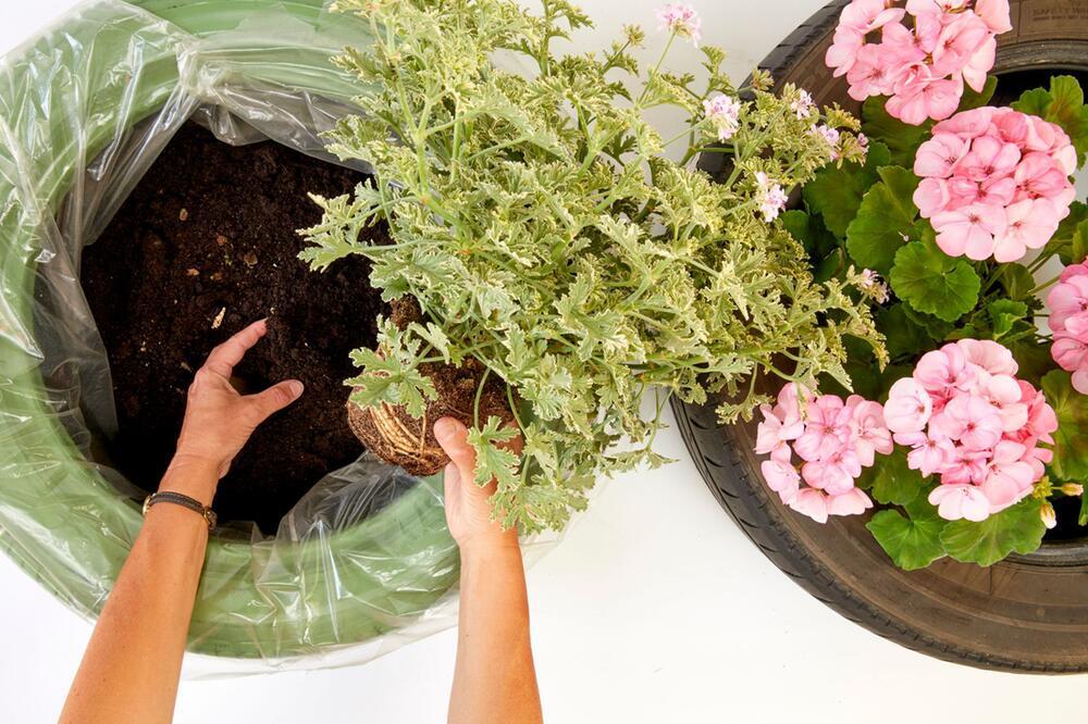 Upcycling-Projekt für den Garten: Geranien in Autoreifen pflanzen