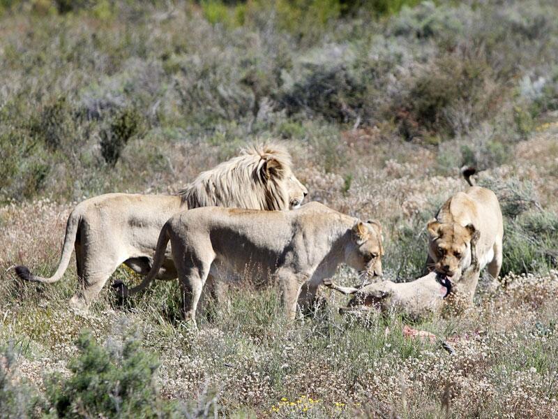 Bild zu Südafrika