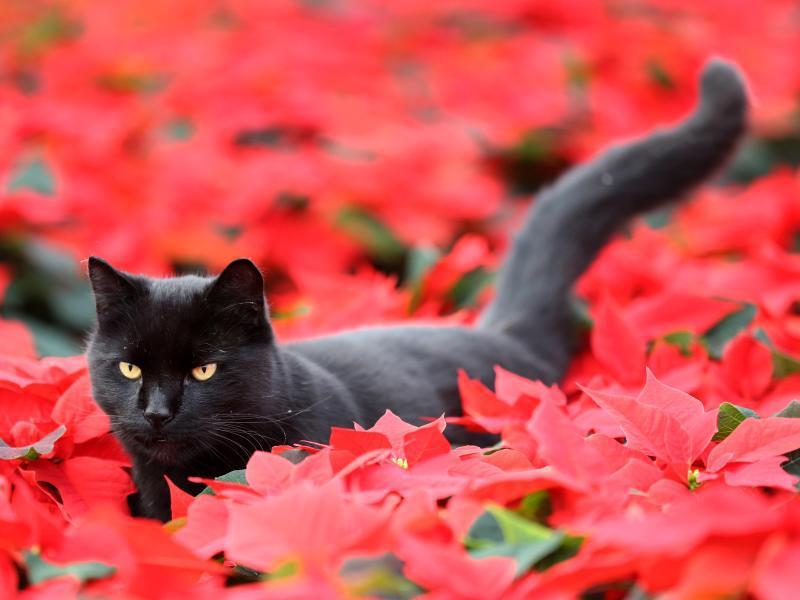 Bild zu Katze streunert durch Blumen