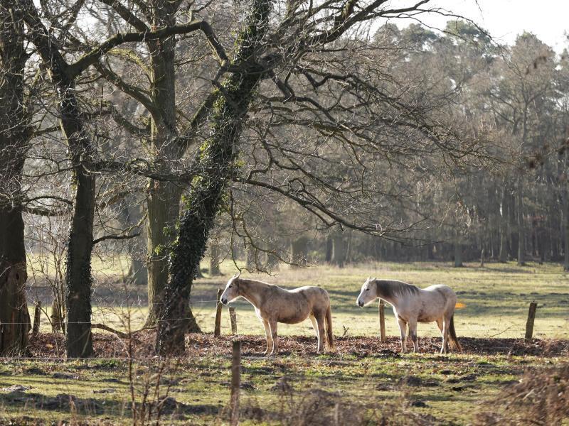 Bild zu Pferde auf der Koppel