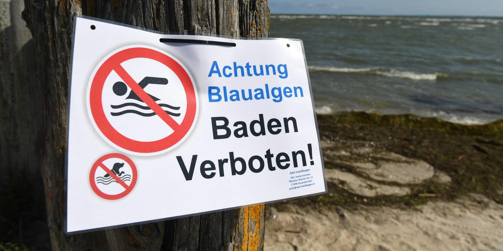 Bild zu Badeverbot - Achtung Blaualgen