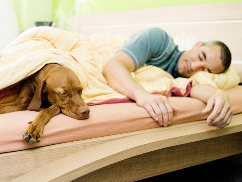 Bild zu Hund mit im Bett