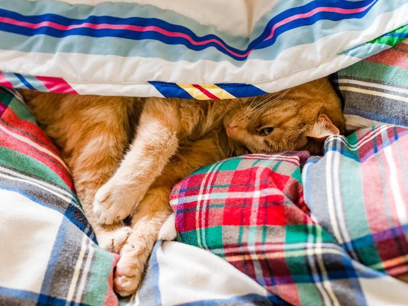 Bild zu Darf die Katze ins Bett?