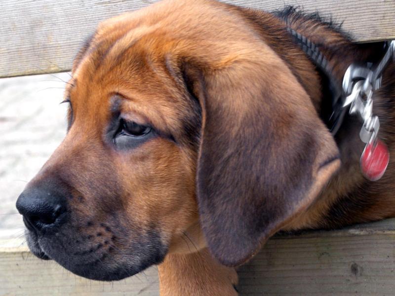 Bild zu Kranker Hund