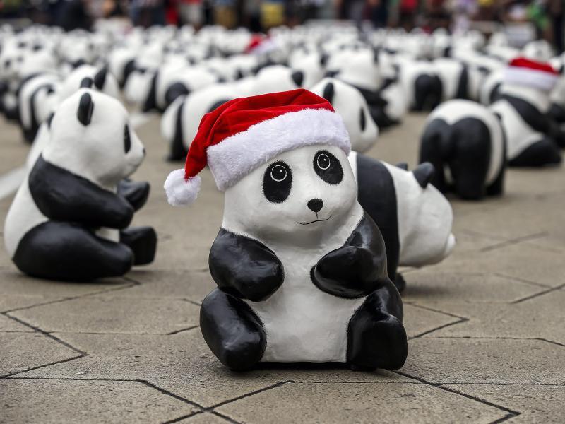 Bild zu Panda-Parade