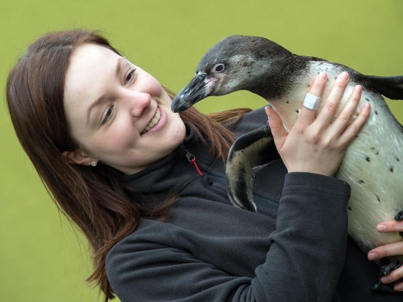Bild zu Spreewald-Pinguine
