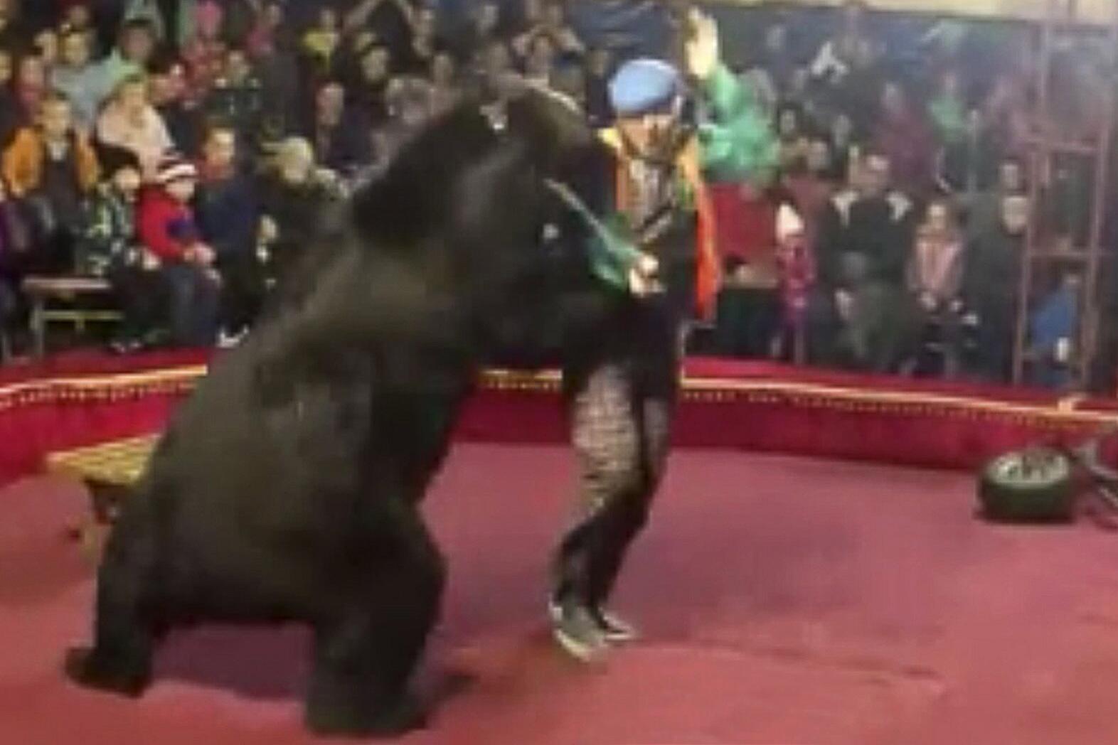 Bild zu Russland - Bärenangriff im Zirkus