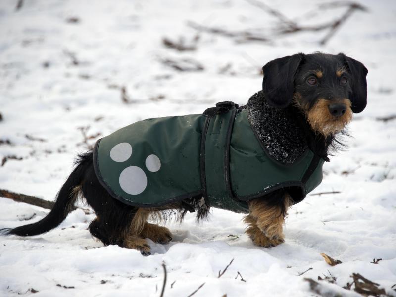 Bild zu Hund im Wintermantel