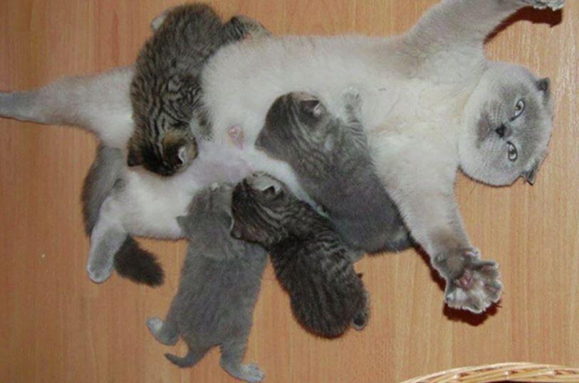Bild zu Tiereltern