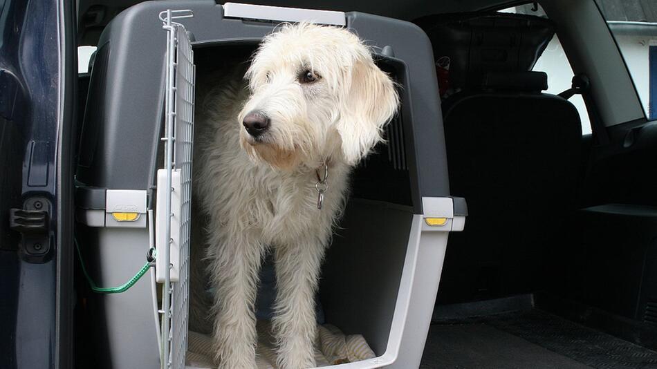 Hund im Auto transportieren: Im Laderaum oder mit Transportbox