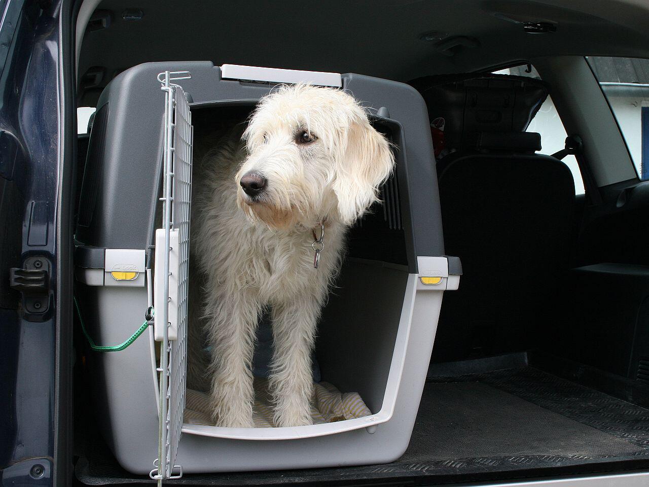 hund im auto so reisen sie mit dem vierbeiner am. Black Bedroom Furniture Sets. Home Design Ideas