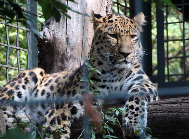 Bild zu Besuch im Zoo