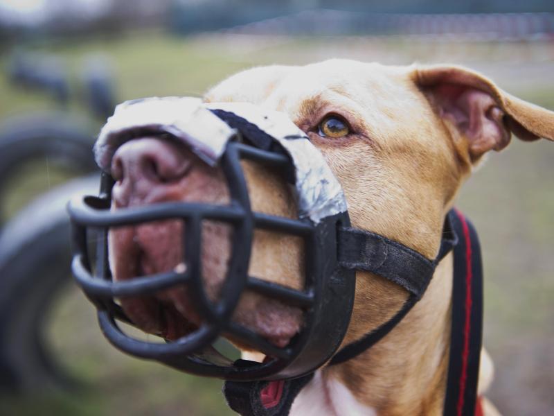 Bild zu Listenhund Skrek