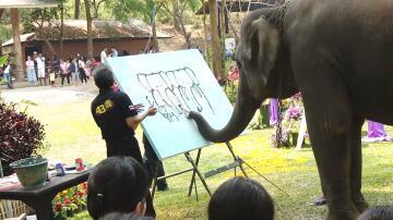 Bild zu Elefant, Thailand, Rüssel, Malen, Gemälde, Chiang Mai, Selbstporträt