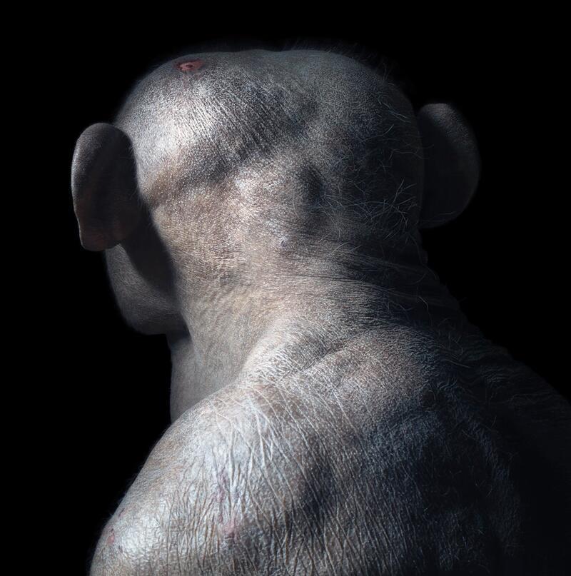 """Bild zu Schimpanse """"Jambo"""" scheint betrübt"""