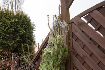 Lagerung eines Weihnachtsbaums