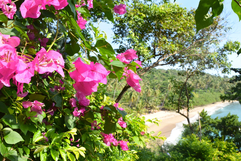 Bild zu Bunte Blumen zieren den Weg zum Haad Thien Beach