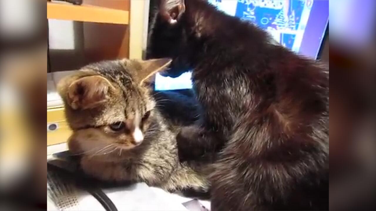Bild zu Feierabend: Katzen geben sich gegenseitig Rückenmassage