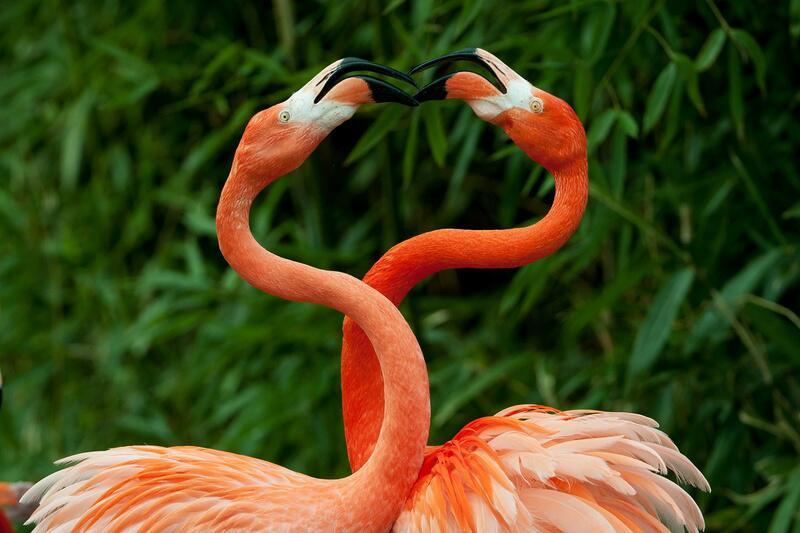 Bild zu Liebe unter Flamingos