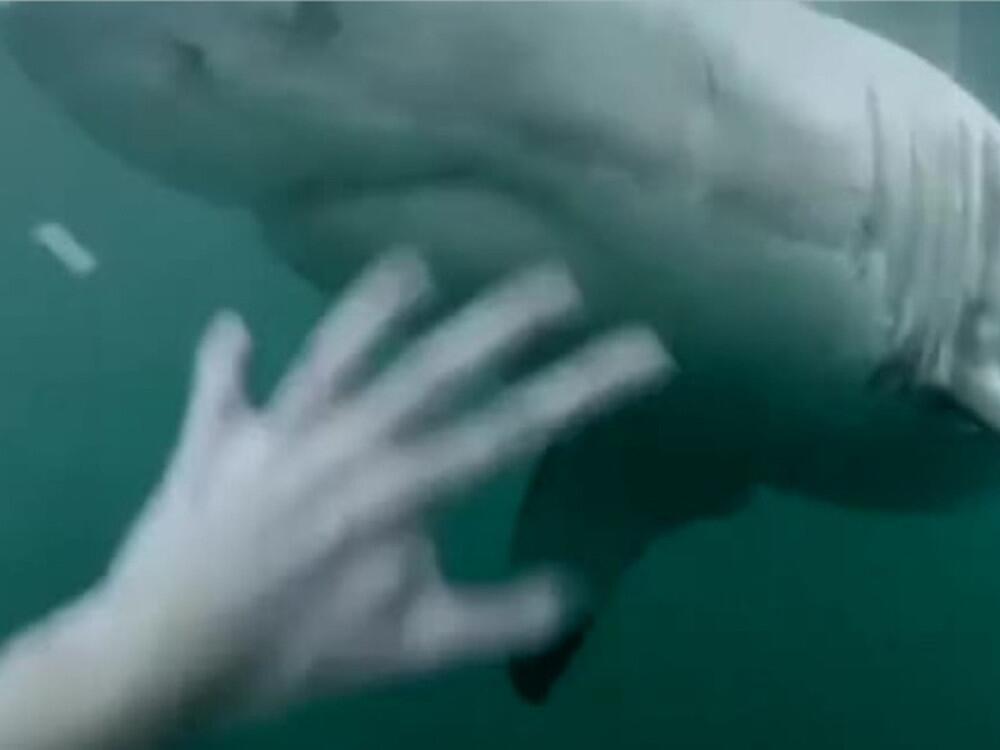 Bild zu Urlauber springt Hai fast auf den Kopf