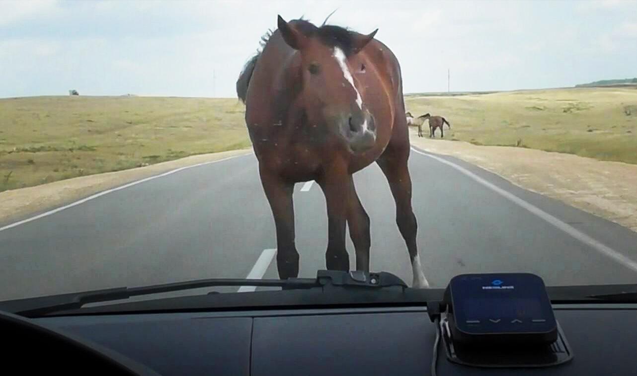 Bild zu Pferd