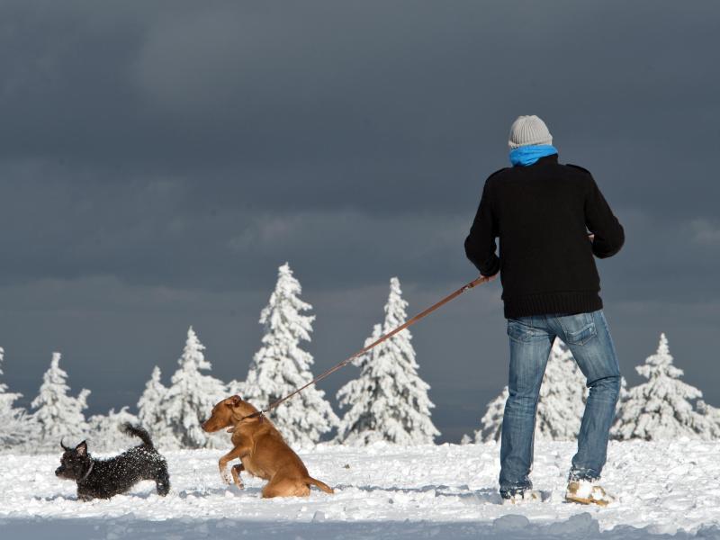 Bild zu Mann spaziert mit Hunden