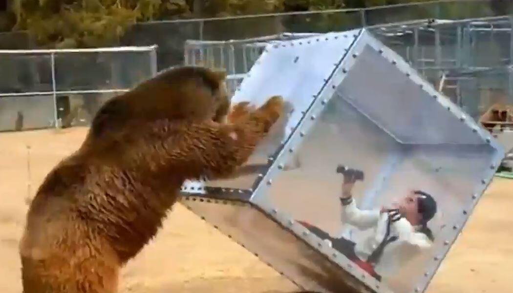 Bild zu Tiere, Urlaub