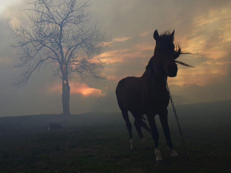 Bild zu Pferd im Sonnenuntergang
