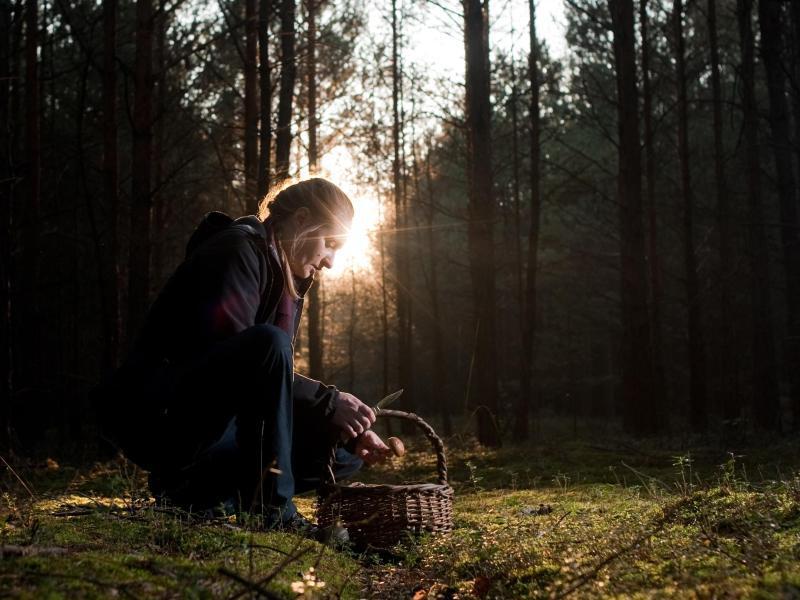 Bild zu Aus dem heimischen Wald in die eigene Küche
