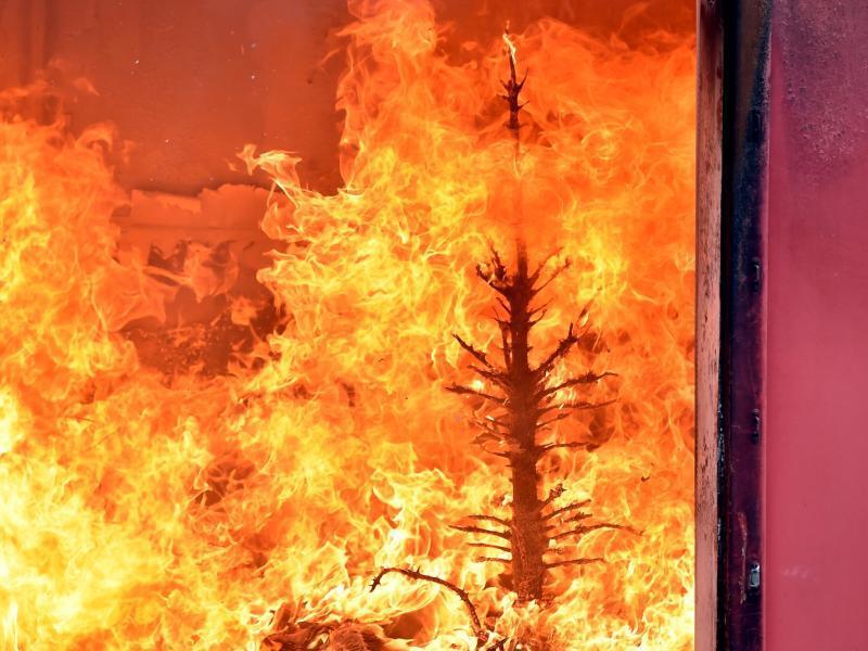Bild zu Brennender Weihnachtsbaum