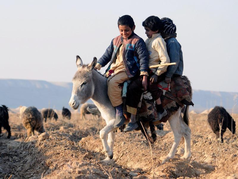 Bild zu Ein Esel, drei Reitersmann ...