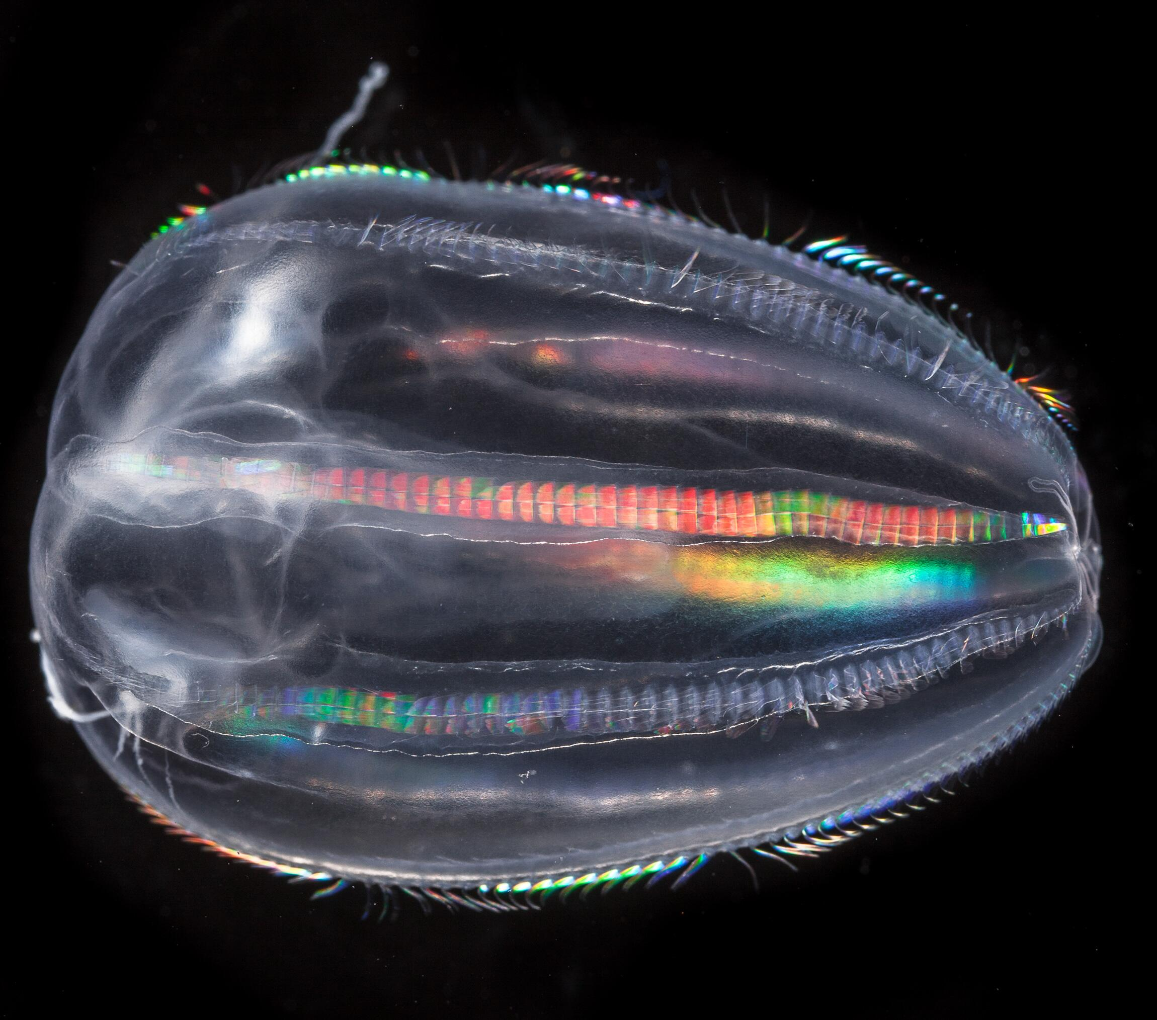 Bild zu Plankton