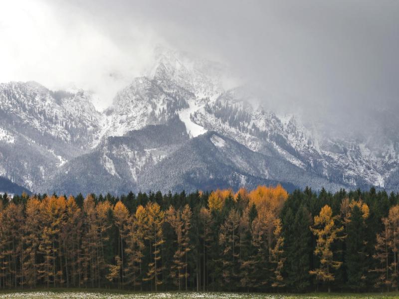 Bild zu Verschneite Alpen