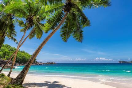 Insel, Palmen, Urlaub, Gefahr, giftig, Schlange, Idylle, Radioaktivität, Naturkatastrophe