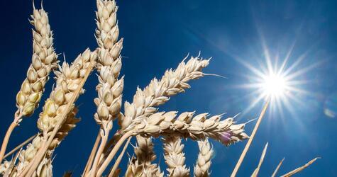 Trockenheit auf Feldern in Niedersachsen