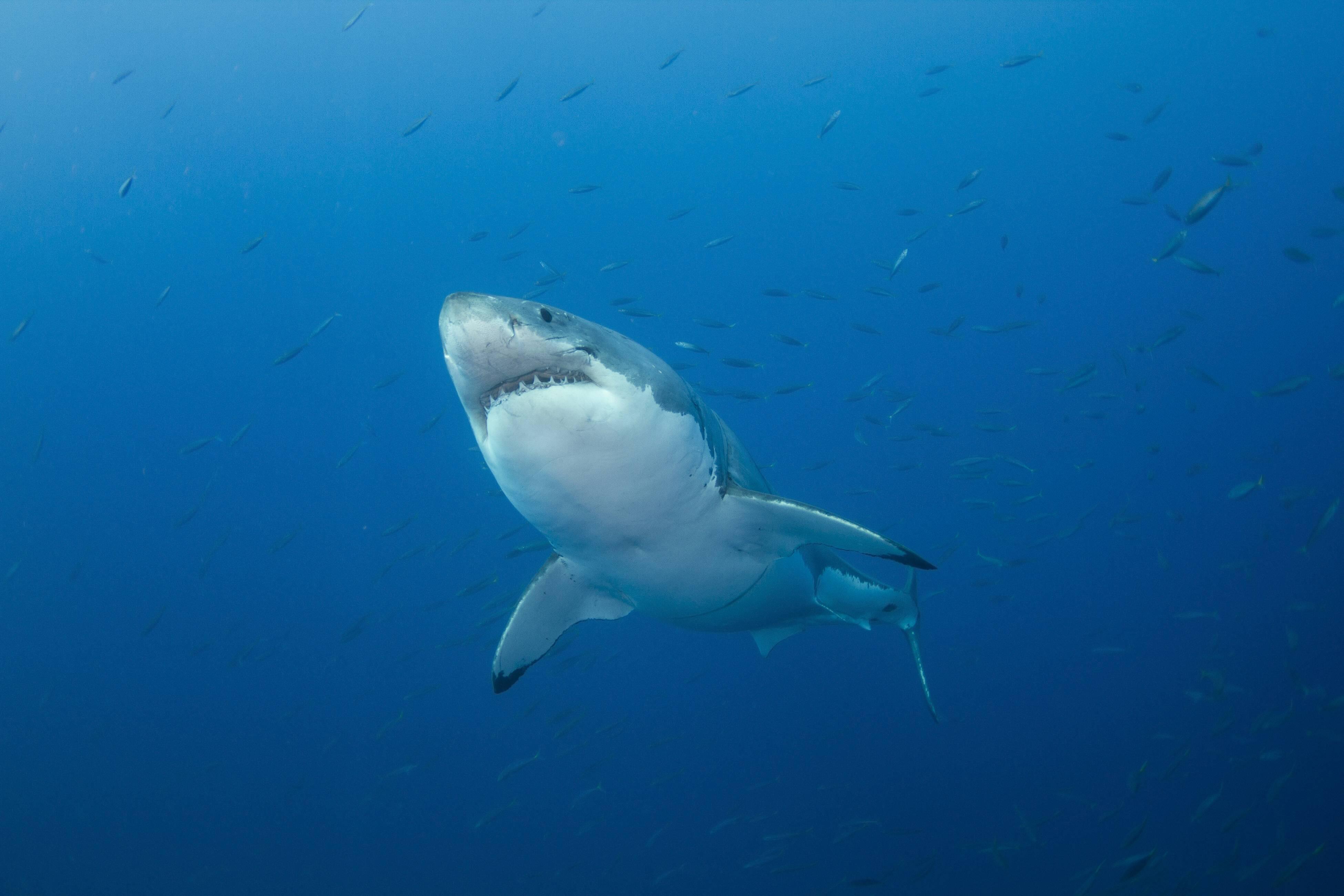 Bild zu Hai Angeln