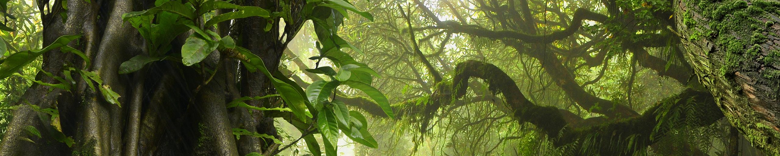 Bild zu Dschungel