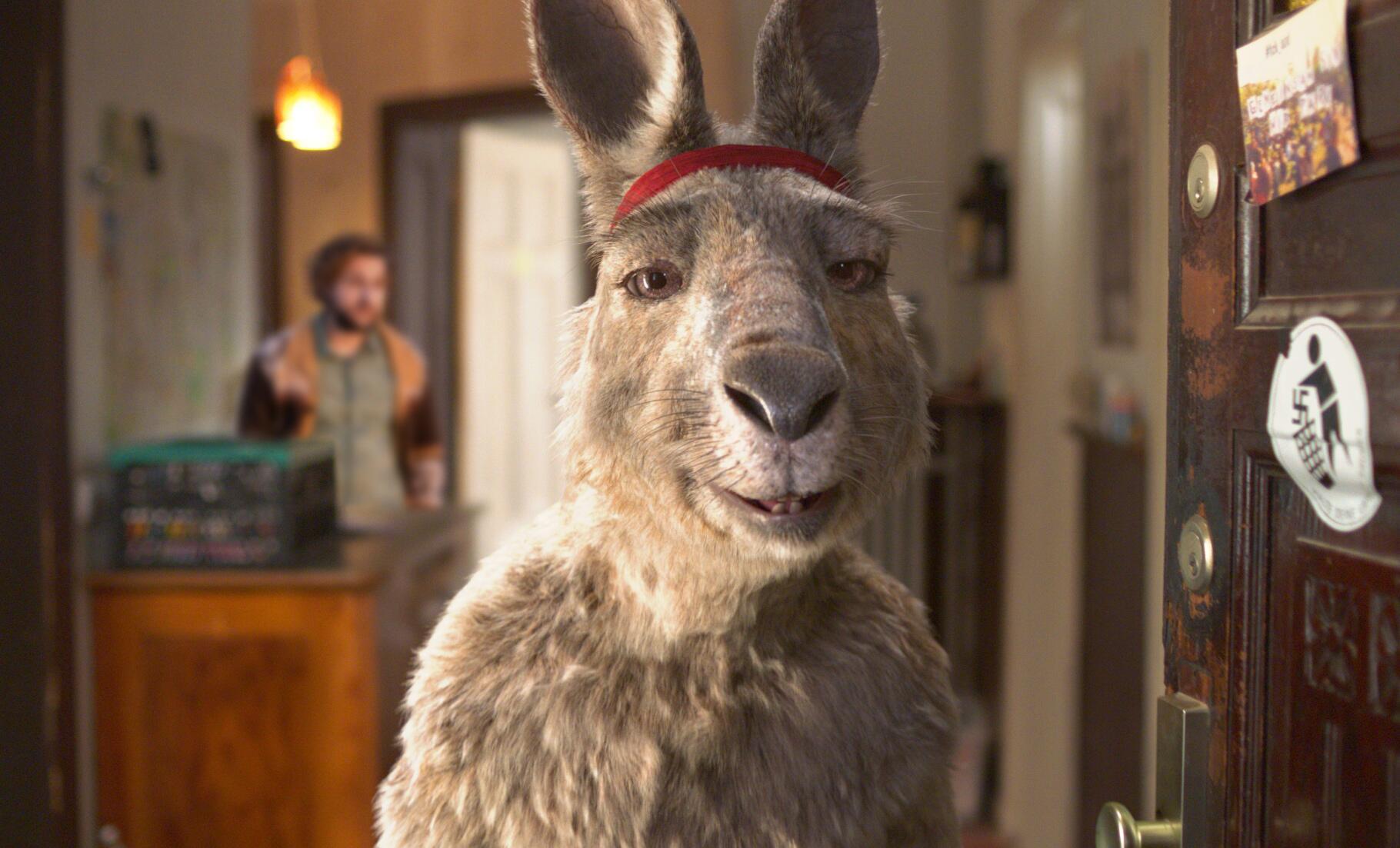 Bild zu Känguru-Chroniken
