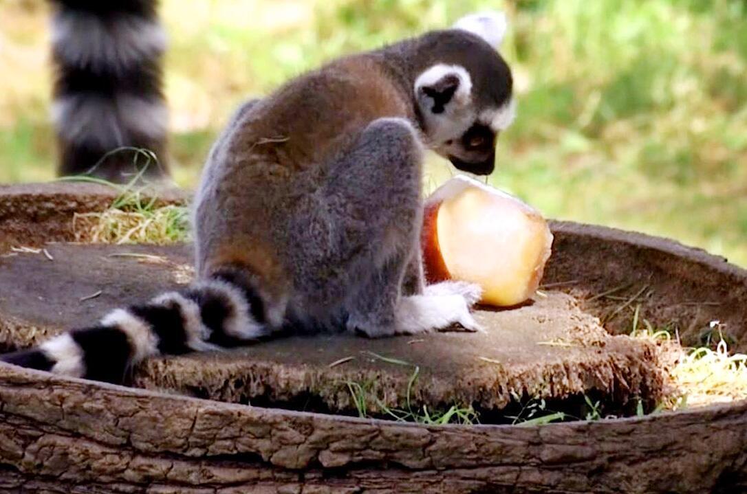 Bild zu Zoo Rom