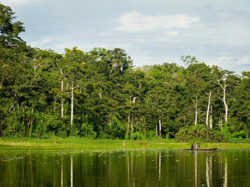 Bild zu Naturreservat Pacaya-Samiria