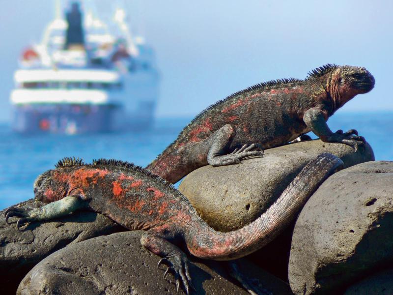 Bild zu Exotisches Reiseziel Galapagos