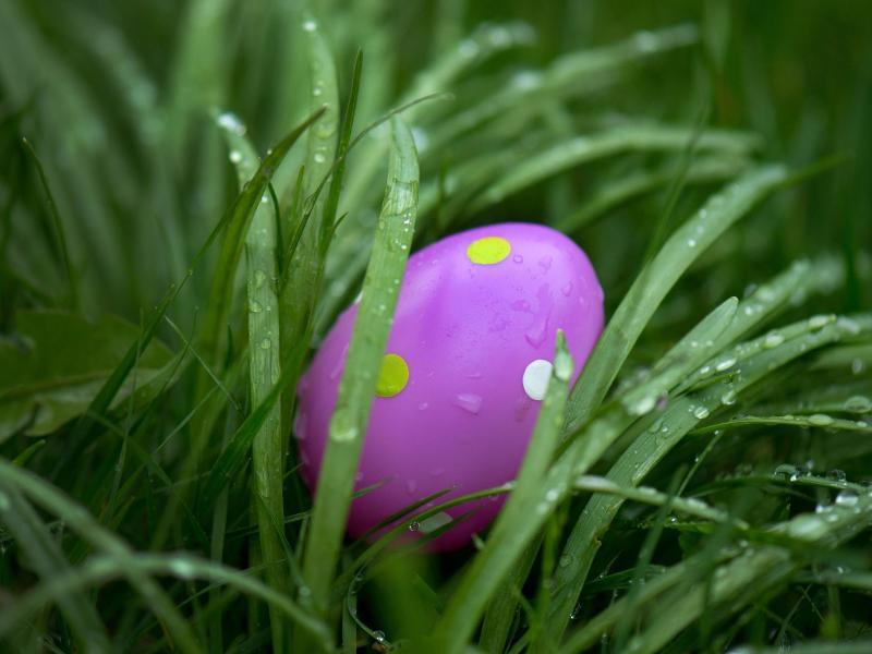 Bild zu Frohe Ostern