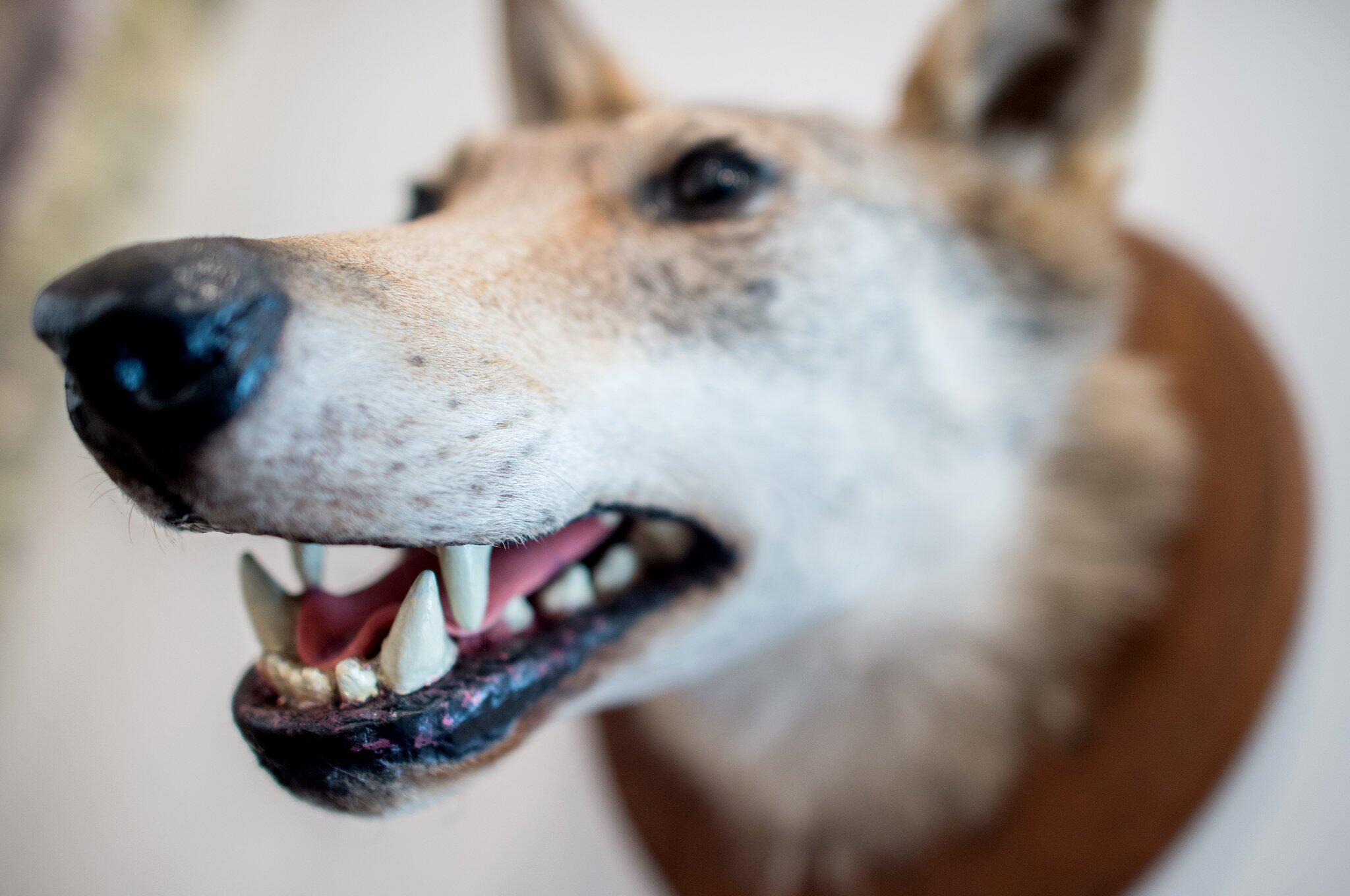 Bild zu Rodewalder Wolfsrudel