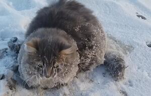 Gefrorene Katze