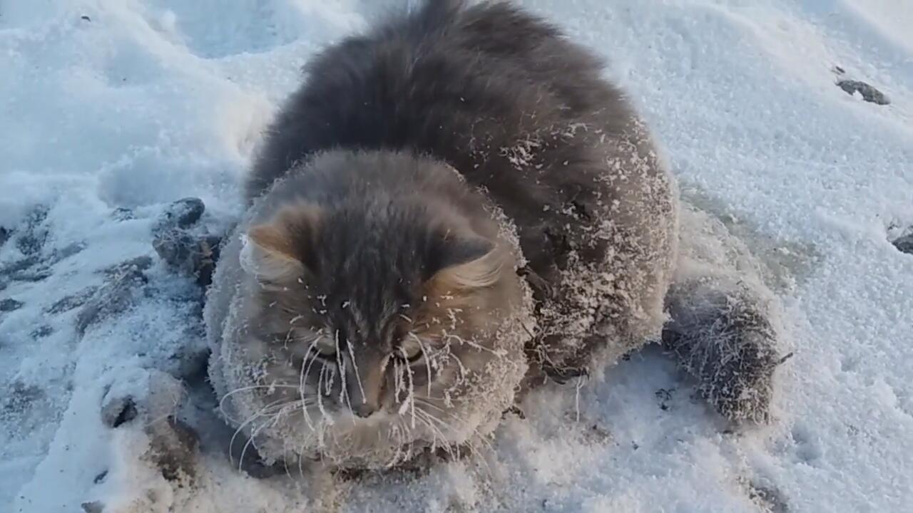 Bild zu Gefrorene Katze