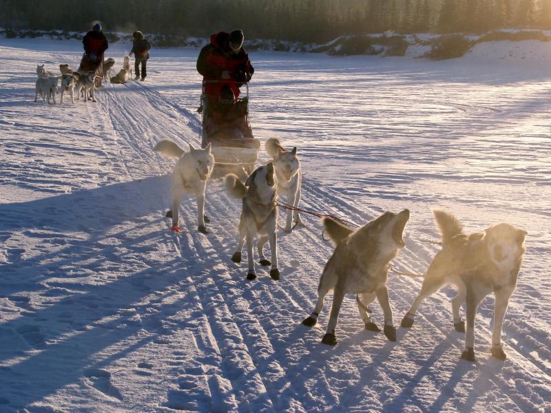 Bild zu Hunde im Einsatz