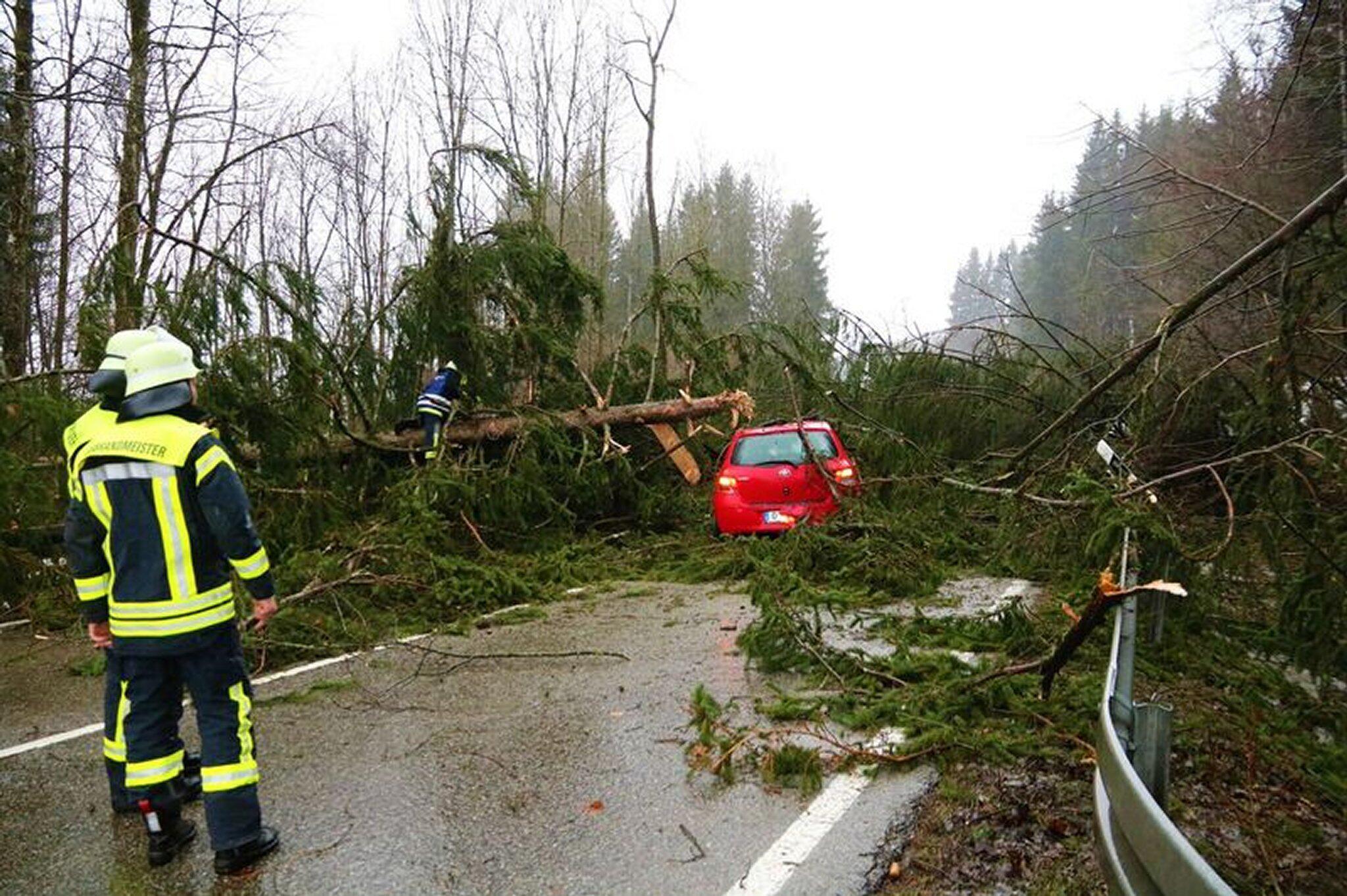 Bild zu Burglind, Sturm, Schäden, B19, umgestürzte Bäume