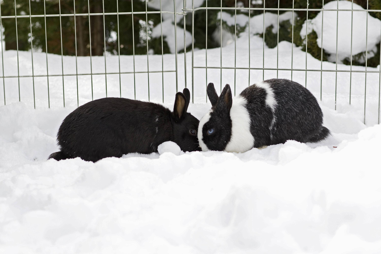 Bild zu Kaninchen