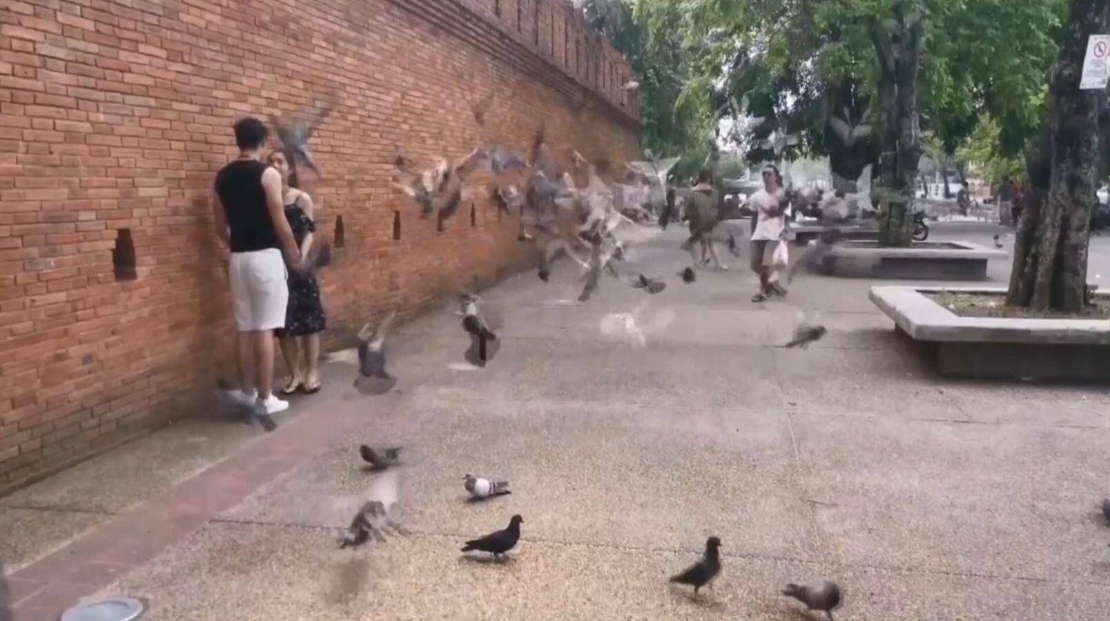 Bild zu Tauben
