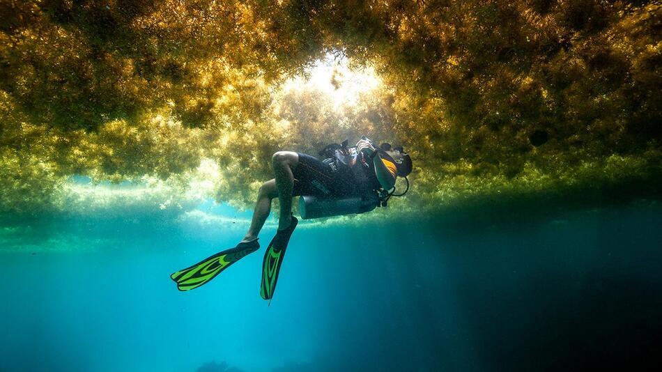 Algenplage in der Karibik